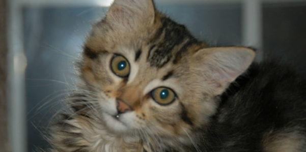 Kitty Slider Image