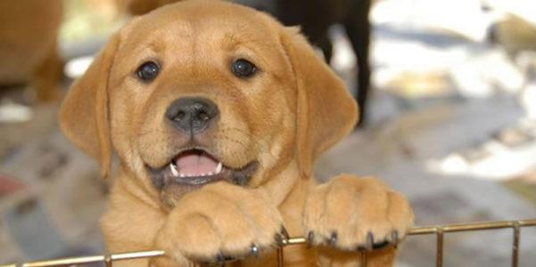 Puppy slider image